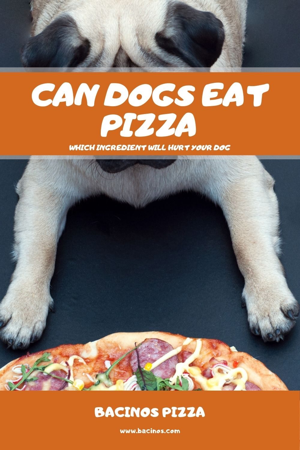 Can Dogs Eat Pizza Which Ingredient Will Hurt Your Dog 1