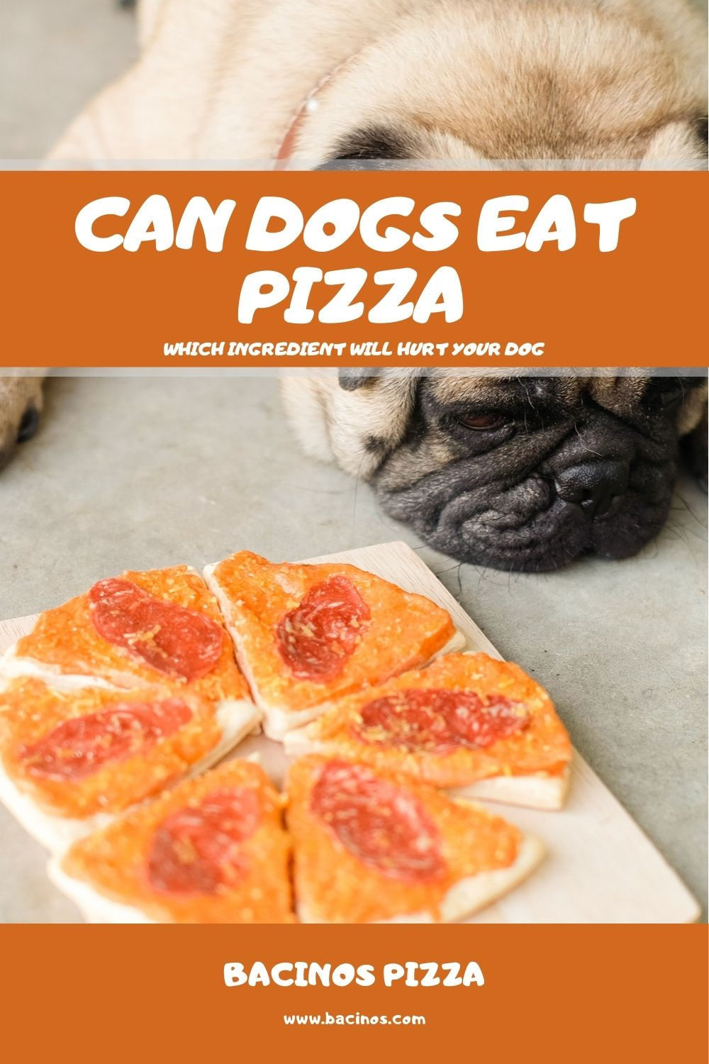 Can Dogs Eat Pizza Which Ingredient Will Hurt Your Dog 2