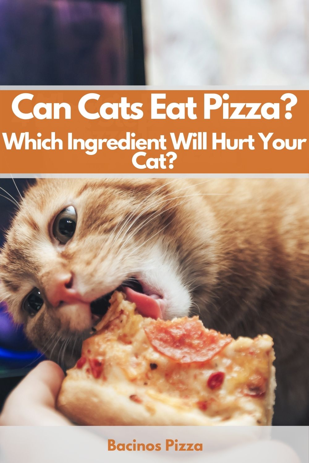 Can Cats Eat Pizza Which Ingredient Will Hurt Your Cat pin